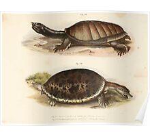 Leopold Joseph Fitzinger 1867 0179 Picture Atlas for popular scientific natural history of vertebrates Poster