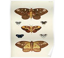 Exotic butterflies of the three parts of the world Pieter Cramer and Caspar Stoll 1782 V2 0079 Poster