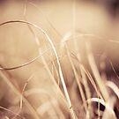 curl by Jen Wahl