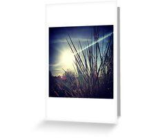Tall Grass Letting Sunshine Poke Through Greeting Card