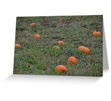 Pumpkin Field Greeting Card