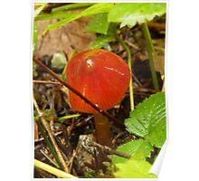 Tiny, shiny red mushroom Poster