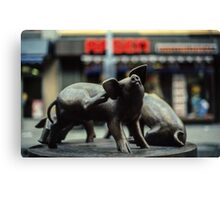 Pigs in town square Trondheim Norway 19840622 0039 Canvas Print