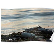 Misty pebbles-Lynmouth beach Poster