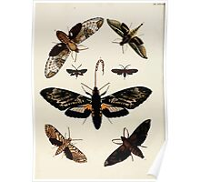 Exotic butterflies of the three parts of the world Pieter Cramer and Caspar Stoll 1782 V4 0434 Poster