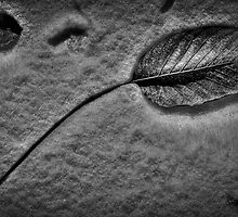 The dead leaf by marcopuch
