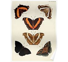 Exotic butterflies of the three parts of the world Pieter Cramer and Caspar Stoll 1782 V4 0010 Poster
