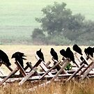 They Wait~ Vultures, Gettysburg Battlefield by AngieDavies