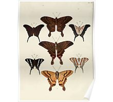 Exotic butterflies of the three parts of the world Pieter Cramer and Caspar Stoll 1782 V3 0036 Poster