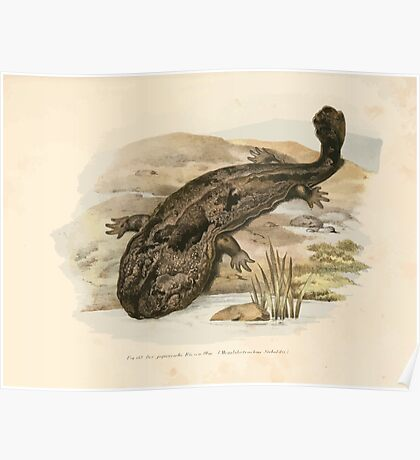 Leopold Joseph Fitzinger 1867 0219 Picture Atlas for popular scientific natural history of vertebrates Poster