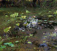 Wetlands of Darwin by rom01