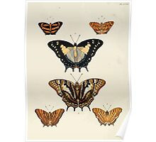 Exotic butterflies of the three parts of the world Pieter Cramer and Caspar Stoll 1782 V3 0108 Poster