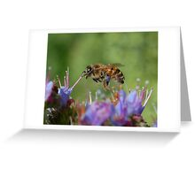 Bee at work-garden Greeting Card