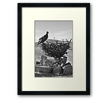 Eagle Eye Over Arboretum Framed Print