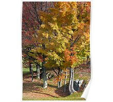 Autumn Trees A Blaze Poster