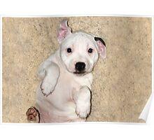 Millie aged 8 weeks Poster