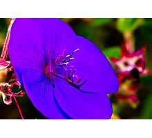 Princess Flower Macro Photographic Print