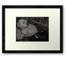 computer dog Framed Print