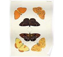 Exotic butterflies of the three parts of the world Pieter Cramer and Caspar Stoll 1782 V2 0277 Poster