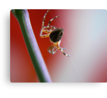 the master webs in red Canvas Print