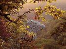 Sunrise coming up on Hawks Bill Craig by David  Hughes