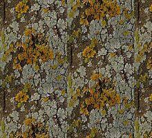 I'm Lichen this  by Creativecap