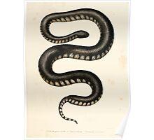 Leopold Joseph Fitzinger 1867 0111 Picture Atlas for popular scientific natural history of vertebrates Poster
