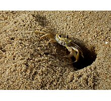 Sand Crab Photographic Print