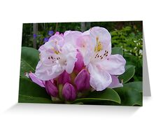 Shades of Pink .. a rhododendron Greeting Card