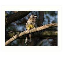 Young Adult Red Wattle Bird in Jacaranda Art Print