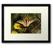 Fall Tiger - Tiger Swallowtail Framed Print