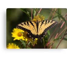 Fall Tiger - Tiger Swallowtail Metal Print