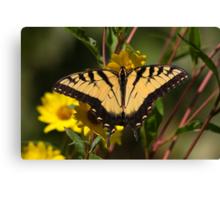 Fall Tiger - Tiger Swallowtail Canvas Print