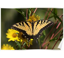 Fall Tiger - Tiger Swallowtail Poster