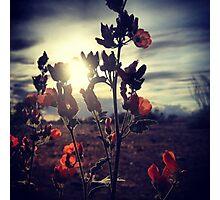 Orange Wildflowers at Dusk Photographic Print