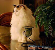 Fat Cat! by Carol Clifford