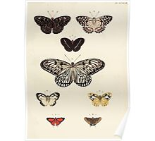 Exotic butterflies of the three parts of the world Pieter Cramer and Caspar Stoll 1782 V4 0295 Poster