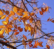 Autumn Gold... by Ruth Lambert