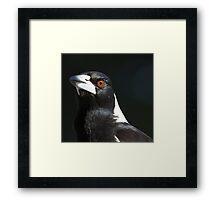 Australian Magpie Framed Print