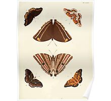Exotic butterflies of the three parts of the world Pieter Cramer and Caspar Stoll 1782 V1 0307 Poster