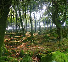 Cornwall: Autumnal Glade by Rob Parsons