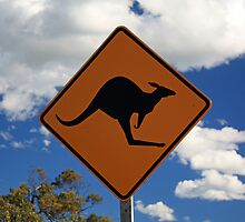 Kangaroos by Mark Bird