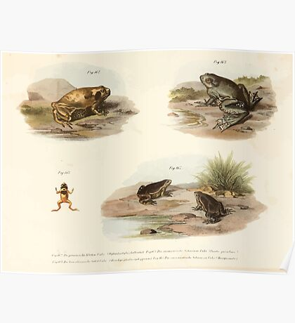 Leopold Joseph Fitzinger 1867 0205 Picture Atlas for popular scientific natural history of vertebrates Poster