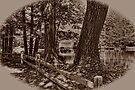 Covered Bridge by Nigel Fletcher-Jones