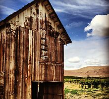 Weathered Barn in Washington State Wine Country  by JULIENICOLEWEBB