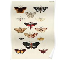Exotic butterflies of the three parts of the world Pieter Cramer and Caspar Stoll 1782 V4 0457 Poster