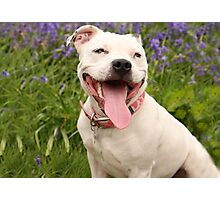 Laughter is the best doggy medicine too! Photographic Print