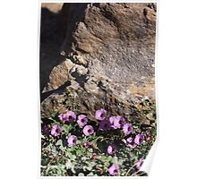 Bindweed Blossoms Poster