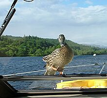 Stowaway, Loch Oich, Caledonian Canal, Scotland. by Roy  Massicks