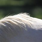 Equine Landscape by Linda Woods